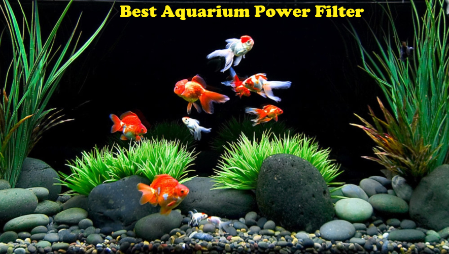 Best Aquarium Power Filter Reviews 2020