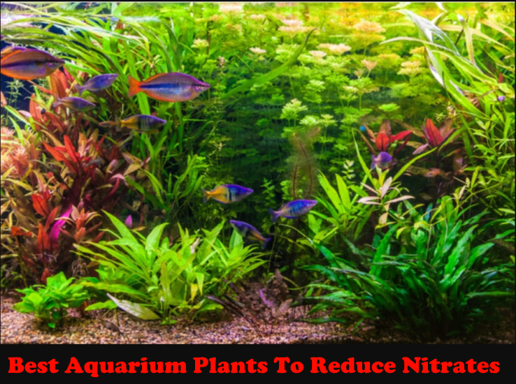 The Best Aquarium Plants To Reduce Nitrates Reviewed 2020